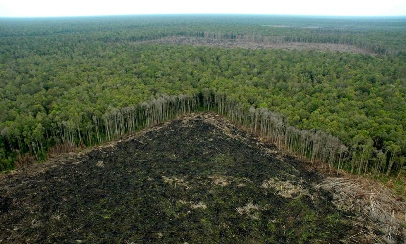 Un bosque en desforestacion